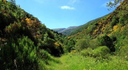 San Millan - Supercalcetines